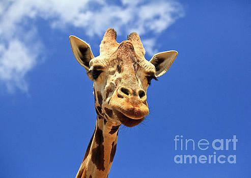 Jill Lang - Giraffe