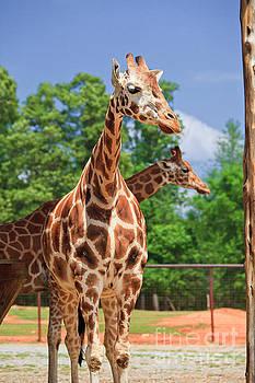 Jill Lang - Giraffe Park