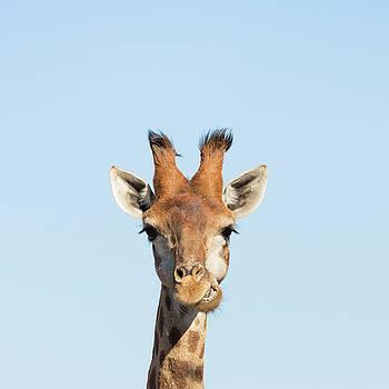 Giraffe  by Petrus Bester