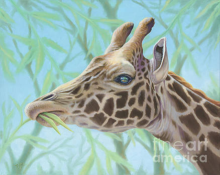 Giraffe Portrait by Tish Wynne