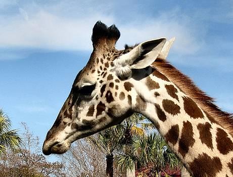 Giraffe Profile by Camera Candy