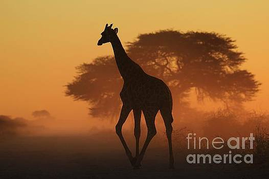 Giraffe Silhouette - Natural Triangles by Hermanus A Alberts