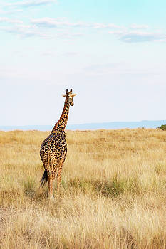 Susan Schmitz - Giraffe Walking in Kenya Africa - Vertical