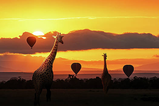 Giraffe Walking Into Sunrise in Africa by Susan Schmitz