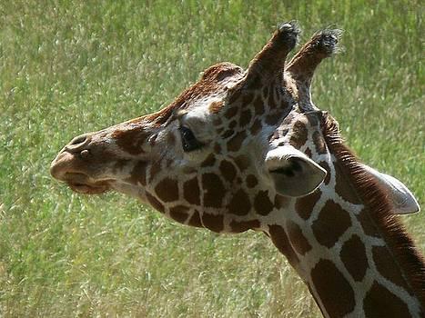 Emily Kelley - Giraffe