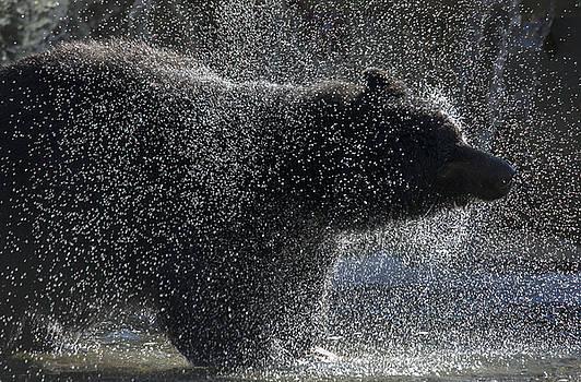 Randy Hall - Bear Spray