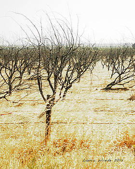 Giving Up - The drought in California Central Valley Taking it's Toll on Trees and Farmers by Artist and Photographer Laura Wrede