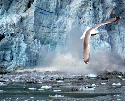 Glacier Bay by Alfred Kohler
