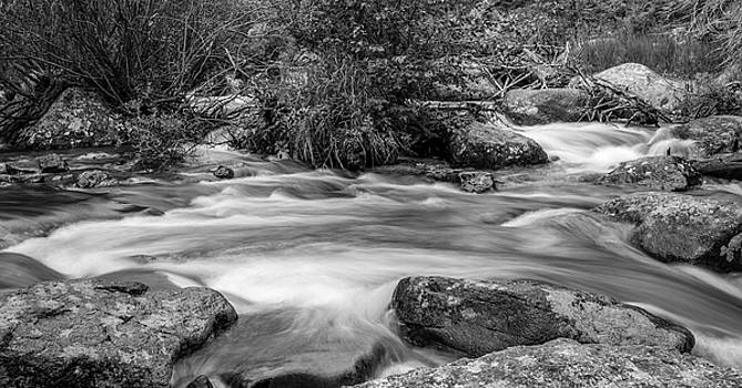 Glacier Creek In Black And White by Michael Putthoff