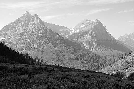 Glacier National Park Fireweed Slope Black and White by Bruce Gourley