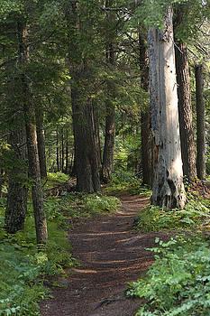 Glacier National Park Trail by Kevin Blackburn