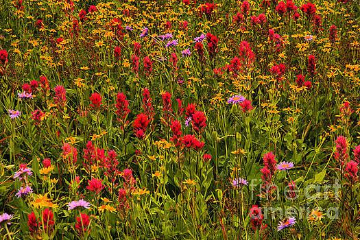 Glacier Wildflowers by Adam Jewell