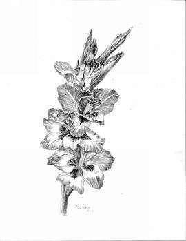 Gladiol by Brenda Hill
