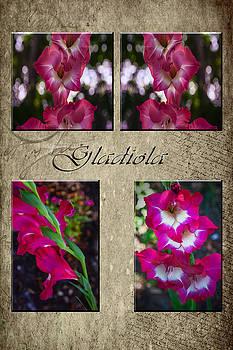Judy Hall-Folde - Gladiola Collage