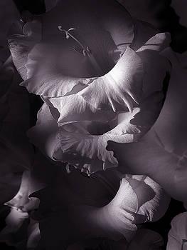 Gladiola by Eugene Forte