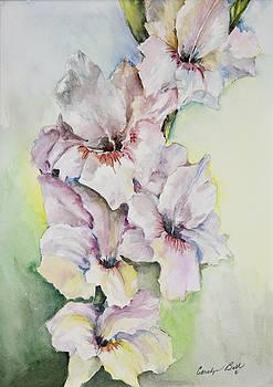 Gladiolus by Carolyn Bell
