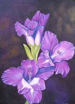 Gladiolus by Elizabeth H Tudor
