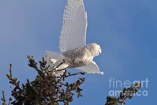 Glamor Girl Taking Flight by Teresa McGill