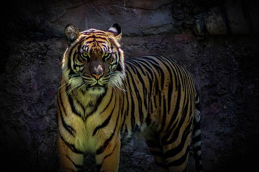 Glare of The Tiger by Luis Rosario