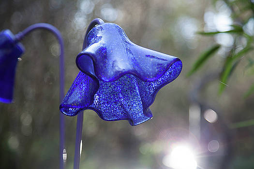 Glass Flower by Linda Freebury