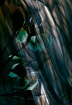 Glass Transparency by Marsha Tudor