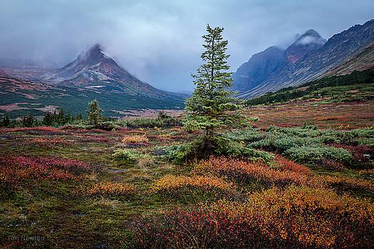 Glen Alps in the Autumn Rain by Tim Newton