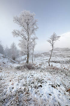 Glen Shiel Misty Winter Trees by Grant Glendinning