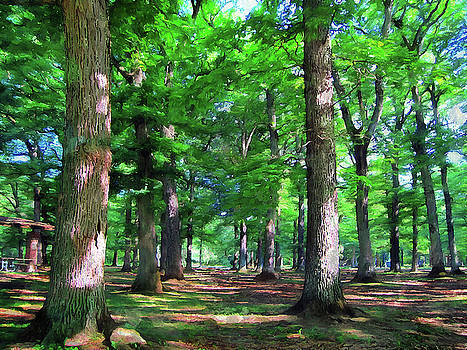 Glenwood Grove by Cedric Hampton