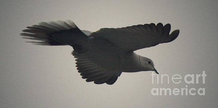 Gliding  by Jessica Shelton