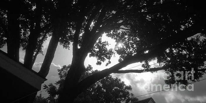 Felipe Adan Lerma - Glimpses - Summer Storm BW Panorama