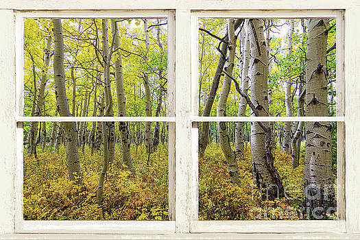 Glorious Golden Forest Window View by James BO Insogna