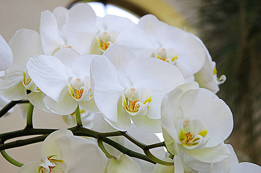 Andee Design - Glorious Orchid Cascade