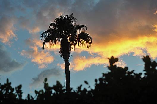 Glorious Sunrise Over Palm Desert by Jay Milo