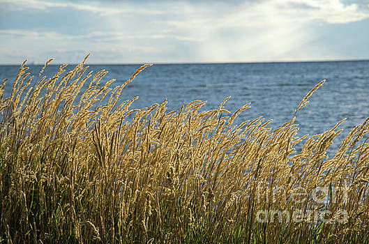 Glowing grass by the coast by Kennerth and Birgitta Kullman