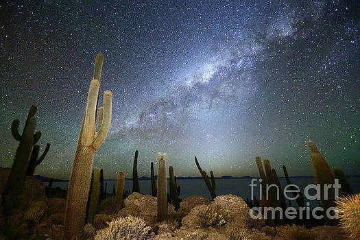 Glowing Heavens Above Cacti on Incahuasi Island Bolivia by James Brunker