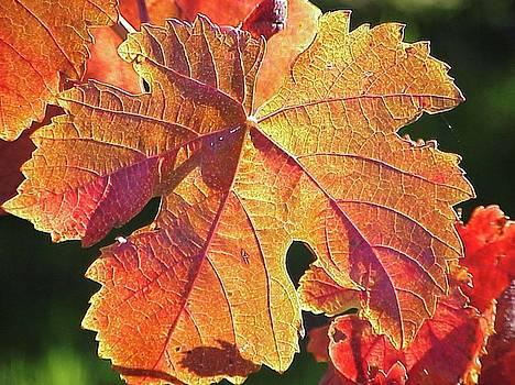 Glowing Leaf by Heather Bethke