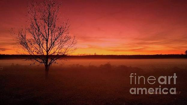Glowing Sunset by Sandra Lett