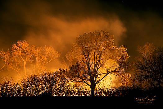 Glowing Tree by Crystal Socha