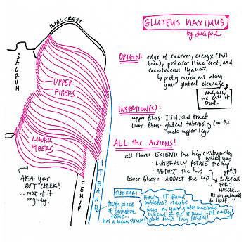 Gluteus Maximus by Julie Read