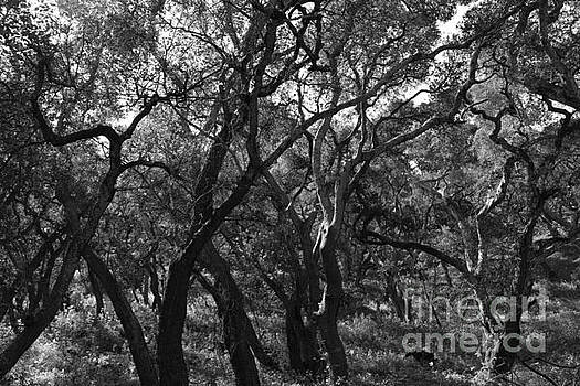 Gnarled Branches BW by Katherine Erickson