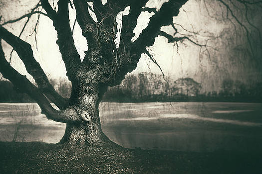 Gnarled Old Tree by Scott Norris