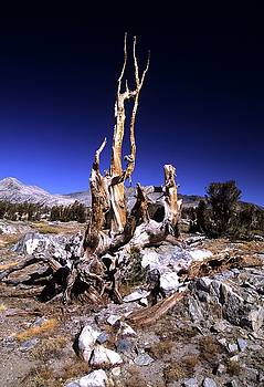Don Kreuter - Gnarled Tree Stump