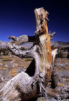Don Kreuter - Gnarled Tree Stump Portrait