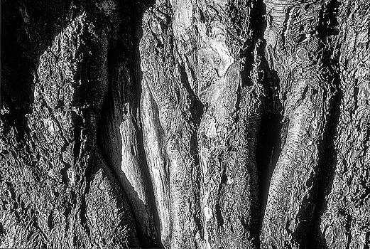 Gnarled Tree Trunk by John Brink