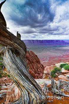 Gnarly Desert by Jim DeLillo