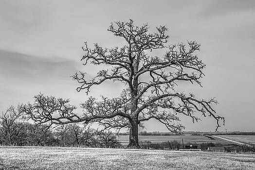 Gnarly Nature by J Laughlin