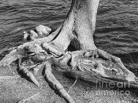 Gnarly Roots Tree by Phil Perkins