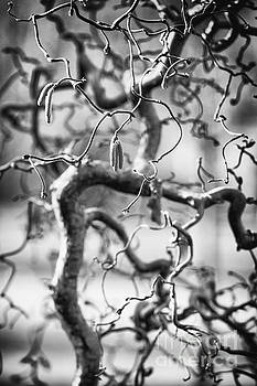 Gnarly Tree In Black and White by Mary  Smyth