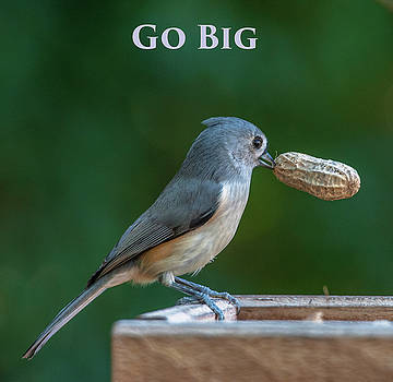 Go Big by Jim Moore
