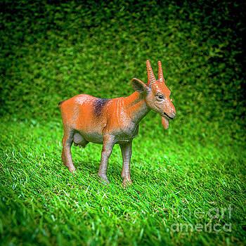 Goat figurine by Bernard Jaubert
